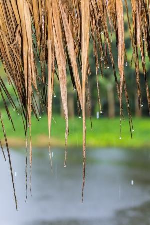 Tropical rain photo