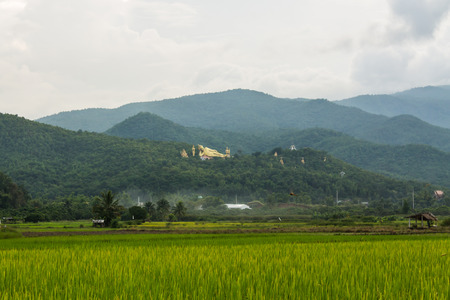Thai field and Golden Buddha big statue at Wat Mokkanlan in Chomthong , Chiangmai Thailand photo
