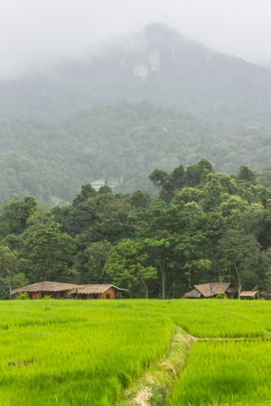 Rain Green Field And Mountain in Doi inthanon, Maeglangluang Karen villages photo