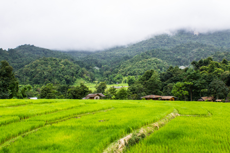 Beautiful green Rice Terraces in Doi inthanon, Maeglangluang Karen villages photo