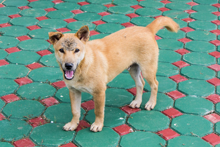 Thai Stray dog photo