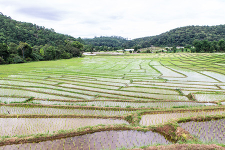Rice field terraces in doi inthanon, Ban Mae Klang Luang Chiangmai photo