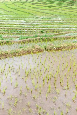 terraces rice field photo