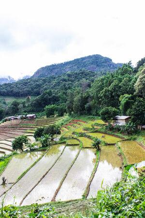 Rice field terraces in doi inthanon, Ban Pha Mon Chiangmai Thailand photo