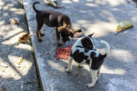 perro comiendo: cachorro thai perro callejero comer Foto de archivo
