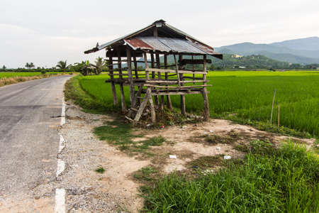 hogshead: old cottage in the rice fields with Thai temple on mountain
