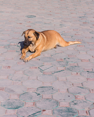stray: thai stray dog Stock Photo