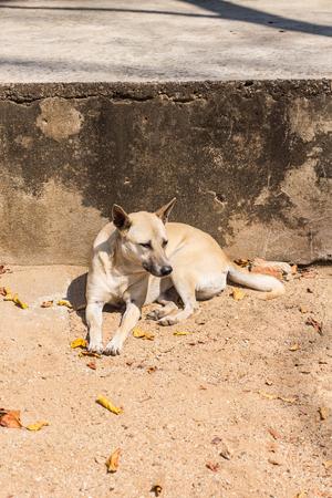 powerless: Homeless thai stray dog