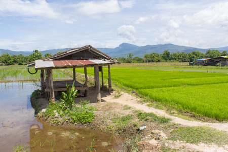 Cottage and green rice field with beauty sky in Thailand, Asia