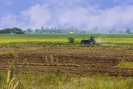 Agriculture plowing tractor on wheat cereal fields, agriculture in asia Stock Photo