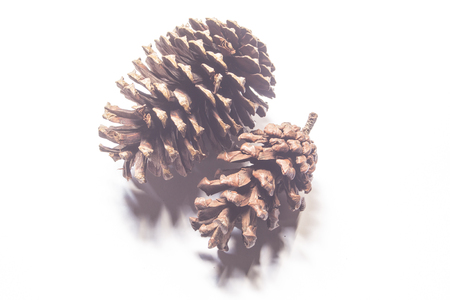 Pine cones isolated on white back ground