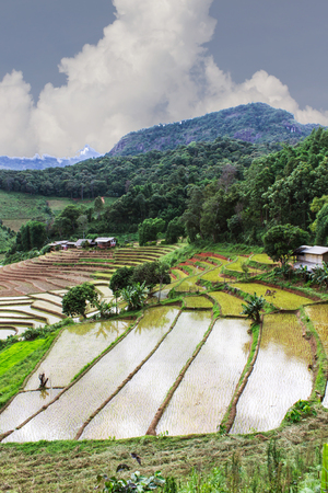 Rice field terraces in doi inthanon, Ban Pha Mon Chiangmai Thailand
