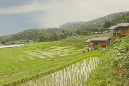 Resort with green Rice Terraces in Doi inthanon, Maeglangluang Karen village, chiangmai Thailand