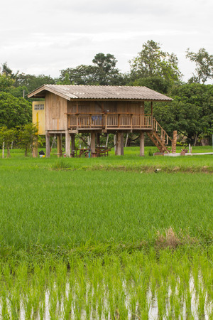 wood house in green rice field Thailand