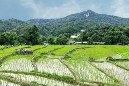 Rice field terraces in doi inthanon, Ban Mae Klang Luang Chiangmai Thailand
