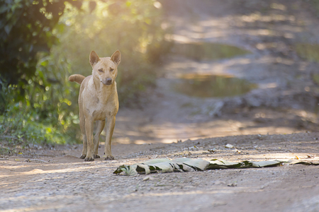 thai stray dog at countryside Stock Photo