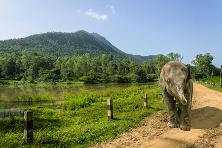 Asian Elephant with  reservoir and mountaun in Thailand Stock Photo