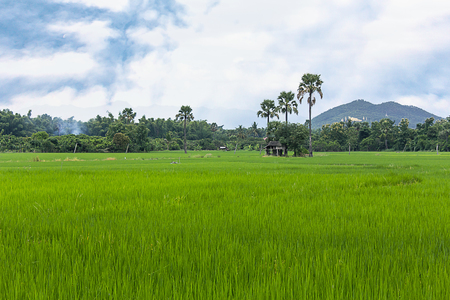 paddy field with parm tree in thailand Stock Photo
