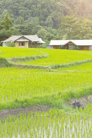 Beautiful green Rice Terraces in Doi inthanon, Maeglangluang Karen village, chiangmai Thailand
