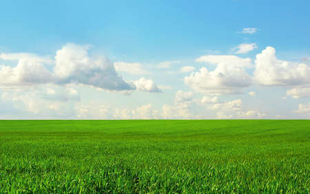 prompt: The green field and the blue sky with clouds is bright Stock Photo