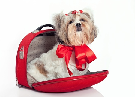 Glamorous dog as a gift in a bag with a bow photo