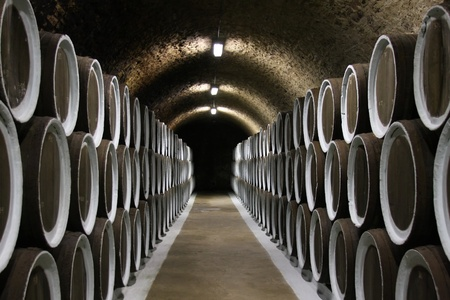 wine grower: Wine cellar