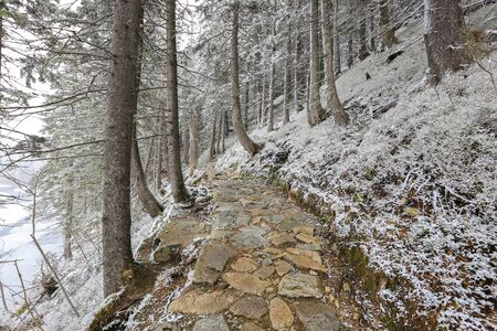 Stone walkway in the winter forest