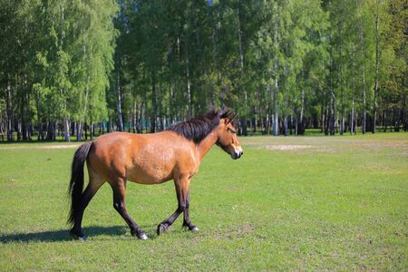 Horse graze on the green field Banque d'images