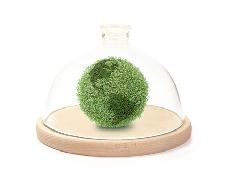 Green plant globe under bell glass on wooden base over white background Stock Photo