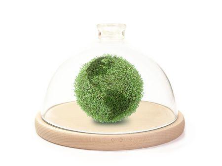 sphere base: Green plant globe under bell glass on wooden base over white background Stock Photo