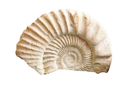 Ammonite fossil of Jurassic period isolated on white Stock Photo