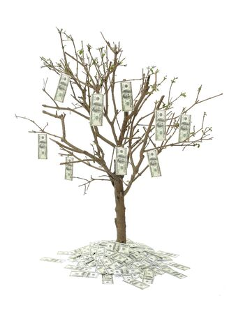 cash crop: One hundred dollar tree over white background Stock Photo
