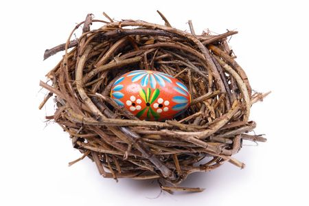 brood: Painted easter egg in birds nest over white background