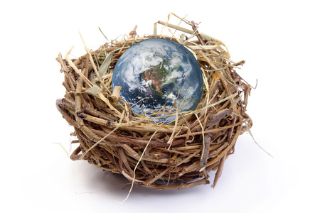nested: Earth globe in birds nest over white background