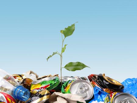 Plantlet groeit op een vuilnis dumpen over heldere blauwe hemel