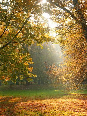 breaking through: Romper los rayos de sol a trav�s de los �rboles en el oto�o de tiempo
