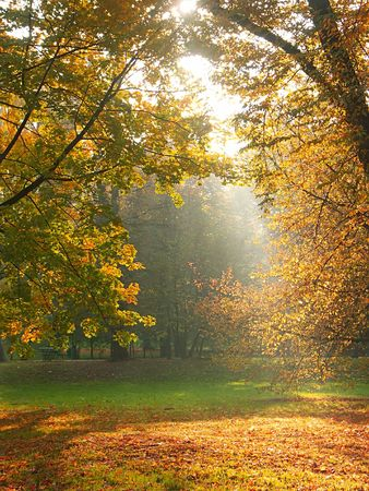 crepuscular: Sun rays breaking through the trees in fall time Stock Photo