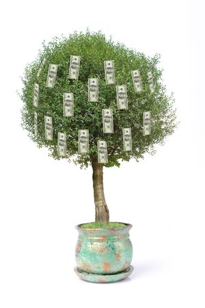 One hundred dollar pot tree over white background Stock Photo