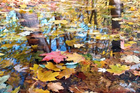 Various dead tree leaves in fall colors floating on water surface with tree trunk reflections Stock Photo - 1942121