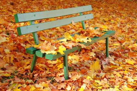 Park bench covered by colorful dead fall leaves Stock Photo