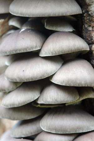 Group of tree fungi growing on tree trunk photo