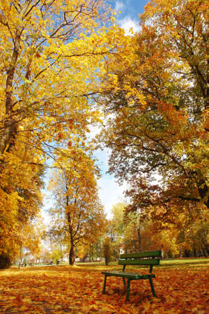 Autumn park alley with green wooden bench photo