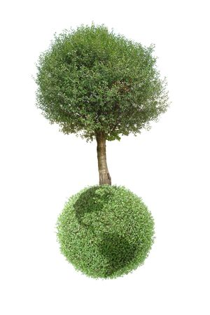 Giant tree growing on green Earth globe isolated on white background Stock Photo - 2905374