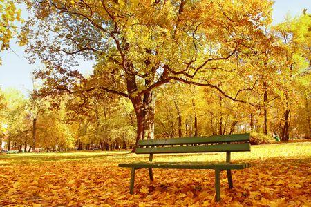 banc de parc: Banc de parc en bois dans le parc � l'automne le temps