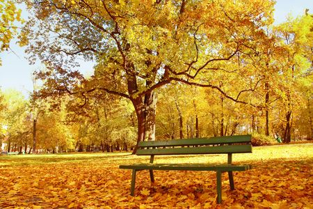 fallen tree: Wooden park bench in the park in fall time