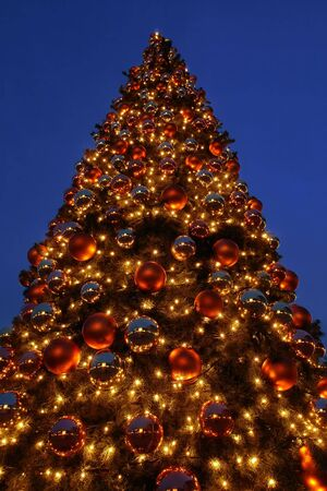 colourful lightings: Giant outdoors Christmas tree illuminated at the evening night against dark blue sky