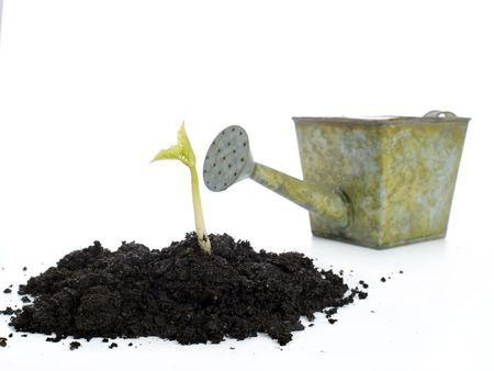 Soil mold with growing bean sprout and watering can in the background - shot isolated on white Stock Photo - 4431644