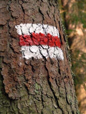 White and red stripe trail sign painted on tree bark photo
