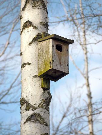 affixed: Wooden bird feeder affixed to birch tree