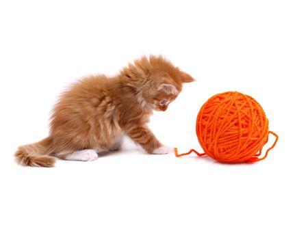 Kitten playing with orange ball of wool shot over white background Reklamní fotografie
